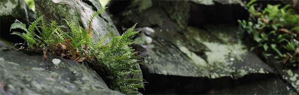 Rock Creek- 05132013-001
