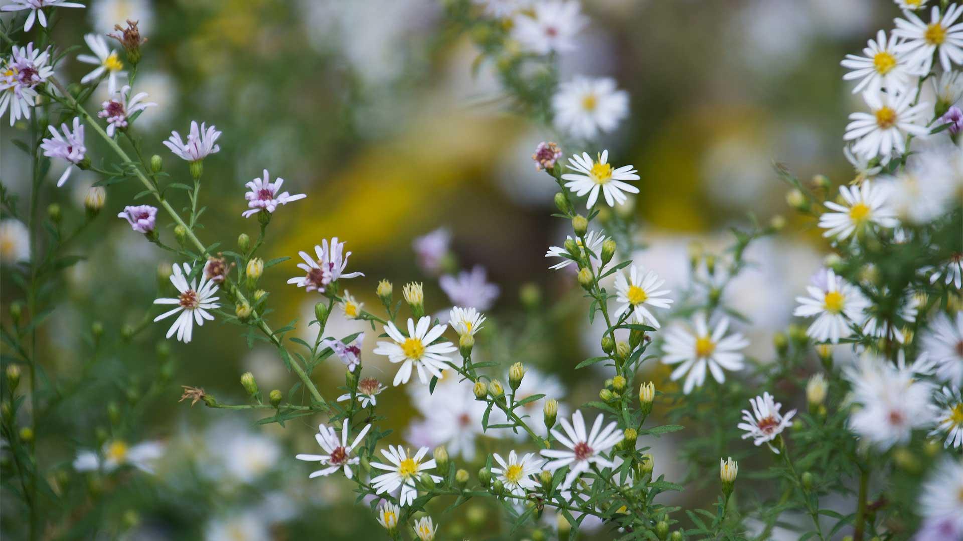 fallwildflowers