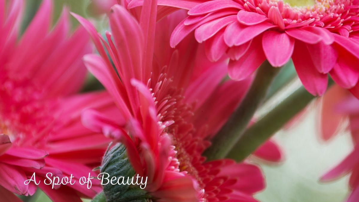 A Spot of Beauty Calendar Cover
